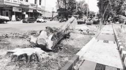 Biaya Penebangan Pohon Perindang di Kota Bitung Dikeluhkan Warga